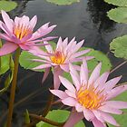 Can-can pink petals water lilies – 2 by Zennia