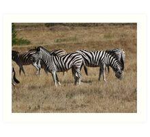 Zebra & Wildebeest Art Print