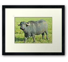 Mrs Buffalo Framed Print