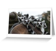 Are you looking at us? Greeting Card