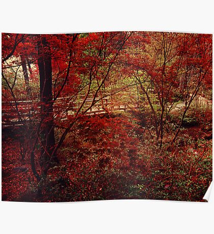 Red Forest Poster