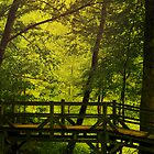 Woodlands by alyphoto