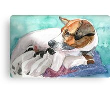 Jack Russell with litter of pups Canvas Print