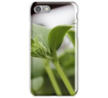 Small Cucumber Plant iPhone Case/Skin
