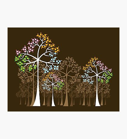 Colorful Four Seasons Trees Photographic Print
