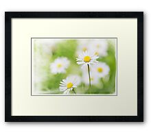 Summer Time Daisies Framed Print