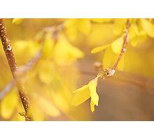 Yellow Morning Photographic Print