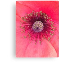 Flower Center Canvas Print