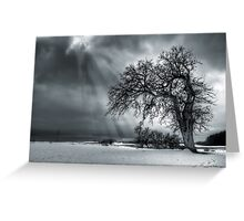 Winter Tree. Greeting Card