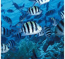 School of Striped Fish by SpiceTree