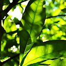 Green Glory by Karen01