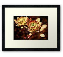 Desert Roses Framed Print