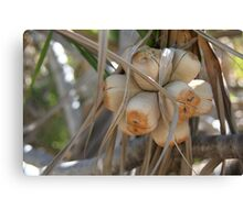 Rock Pandanus Fruits Canvas Print
