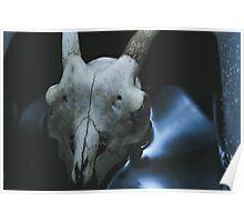 Taxidermy Goat Skull Print2 Poster