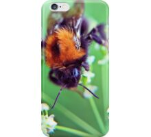 Bee Trouble iPhone Case/Skin