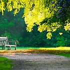A lonely bench by willgudgeon