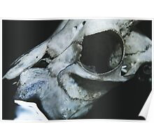 Taxidermy Goat Skull Print6 Poster