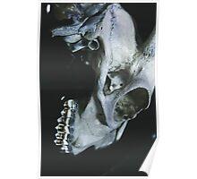 Taxidermy Goat Skull Print7 Poster