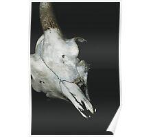 Taxidermy Goat Skull Print8 Poster