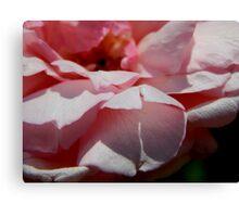 Rose Garden Series ~ 5 Canvas Print