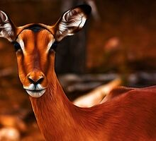 Impala Female by Nicolas Raymond