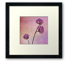 Chive Blossoms Framed Print