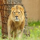 The Lion by Gene Praag