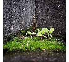 { Corners: where the walls meet #02 } Photographic Print