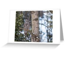 Great Grey Owl in a tree Greeting Card