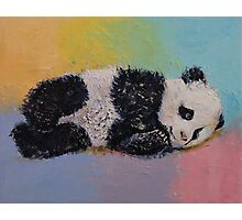 Baby Panda Rainbow Photographic Print