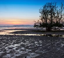Mangrove Tree At Dawn by Kevin Hellon