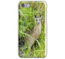 Wild Kangaroo, Coombabah Wetlands, Gold Coast, Australia. iPhone Case/Skin