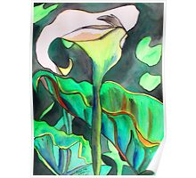 Arum Lily Poster