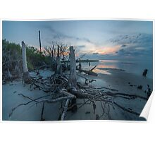 Stumps at Sunset - St. George Island Poster