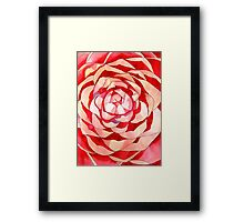 Pink Camellia abstract flower Framed Print