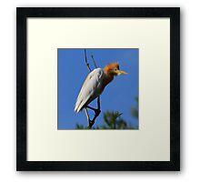 Crazy Bird Framed Print