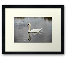 swan screamer Framed Print