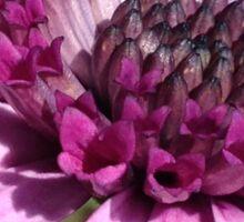 Macro purple flower Sticker