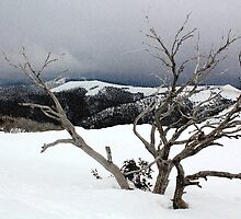 A snowstorm on a mountainside in Australia by jwwallace