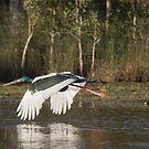 Fly  by byronbackyard