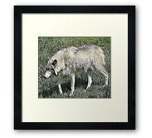 Rexburg Idaho - Timber Wolf Framed Print