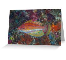 Yellowfin Flasher Greeting Card