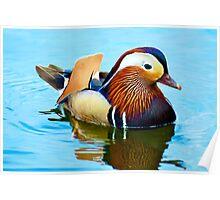 Mandarin Duck, Hyde Park  Poster