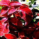 nature red leaves  by StuartBoyd