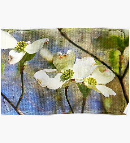 Dogwood Blosssoms Poster