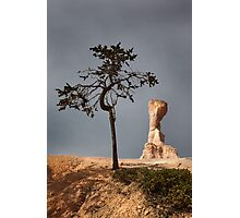 Tree and Queen Victoria, Bryce Canyon National Park, Utah, USA. Photographic Print