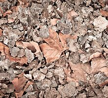 Dry leaves by pifate
