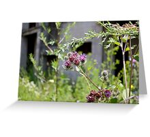 Thistles in front of ruins Greeting Card