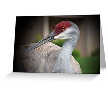 Sandhill Crane (Grus canadensis) Greeting Card