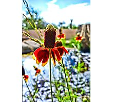 Cone Flower and Pond Photographic Print